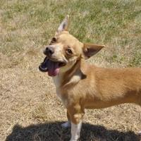 Adopt A Pet :: Nahla - Central Point, OR
