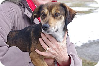 Beagle Mix Dog for adoption in Elyria, Ohio - Clyde