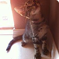 Adopt A Pet :: REUBEN - Phoenix, AZ