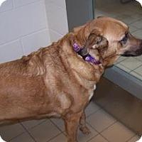 Adopt A Pet :: Lady - Jackson, MI