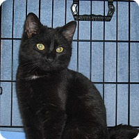 Adopt A Pet :: Shiloh (Loves Tummy Rubs) - Arlington, VA