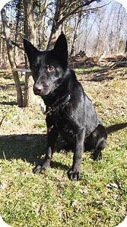 German Shepherd Dog Mix Dog for adoption in Louisville, Kentucky - Jazzy