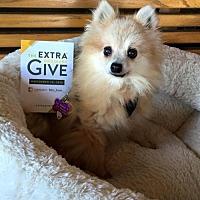 Adopt A Pet :: Foxy Leach - Elizabethtown, PA