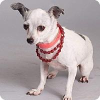 Adopt A Pet :: Opal - Mesa, AZ