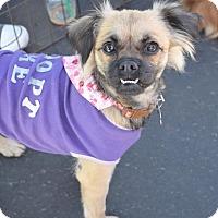 Adopt A Pet :: Pamela - San Diego, CA
