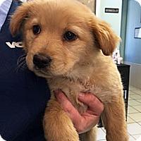 Adopt A Pet :: P17 Flash - BIRMINGHAM, AL