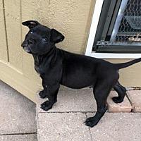 Adopt A Pet :: Rocket - Adoption Pending! - West Bloomfield, MI