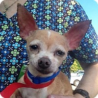 Adopt A Pet :: Peanut - Memphis, TN