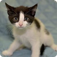 Adopt A Pet :: Acadia - Medina, OH