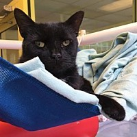 Adopt A Pet :: Stinkbug - Philadelphia, PA