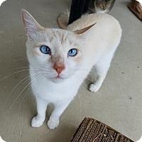 Adopt A Pet :: Yahtzee - Umatilla, FL