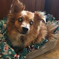 Adopt A Pet :: Fiona:loves car rides! (TN) - Seymour, CT