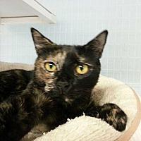 Adopt A Pet :: Yezmynn - Margate, FL