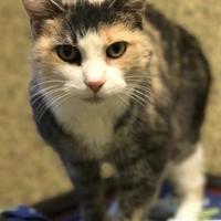 Adopt A Pet :: Silvie - Merriam, KS