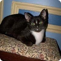 Adopt A Pet :: Madeira - Tarboro, NC
