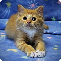 Adopt A Pet :: Oscar - Greensboro, NC