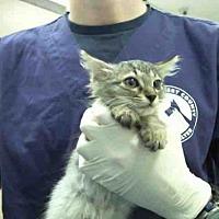 Adopt A Pet :: A292969 - Conroe, TX