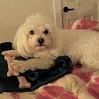 Adopt A Pet :: Sally - Brownsboro, AL