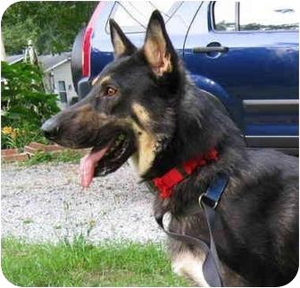 German Shepherd Dog Dog for adoption in Pike Road, Alabama - Marx