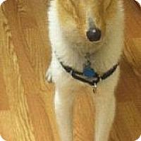 Adopt A Pet :: Jake II - Minneapolis, MN