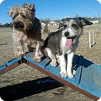 Adopt A Pet :: Stormy - Alliance, NE