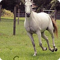 Adopt A Pet :: Glitter - Cantonment, FL
