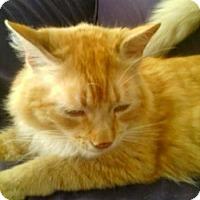 Adopt A Pet :: Rusty - Davis, CA