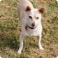 Adopt A Pet :: Blu - Encino, CA