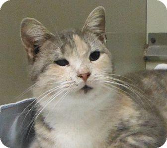 Domestic Shorthair Cat for adoption in Cedartown, Georgia - 30138090
