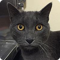 Adopt A Pet :: Elmo - Winchester, CA