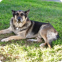 Adopt A Pet :: King - Santa Monica, CA