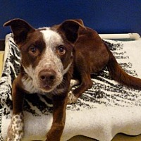Adopt A Pet :: Frisco - Diamondville, WY