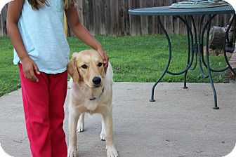 Golden Retriever Mix Puppy for adoption in Coventry, Rhode Island - Ruby