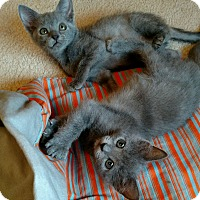 Adopt A Pet :: Willow & Ivy - Monroe, NC