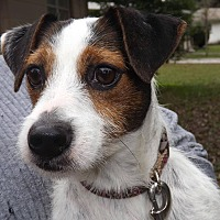 Adopt A Pet :: Dixie - Lutz, FL