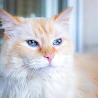 Adopt A Pet :: Tipsy - Santa Paula, CA