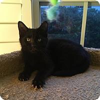 Adopt A Pet :: Cody - Mount Pleasant, SC