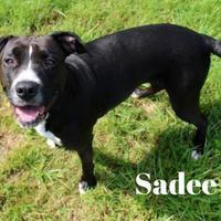Adopt A Pet :: Sadee - Melbourne, KY