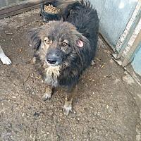 Adopt A Pet :: Jack - Pickering, ON