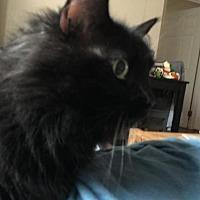 Adopt A Pet :: Beckie - Somerville, MA