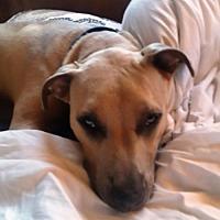 Adopt A Pet :: COOPER - Emotional Support Animal - DeLand, FL