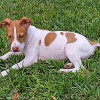 Adopt A Pet :: MAGPIE - Palm Harbor, FL