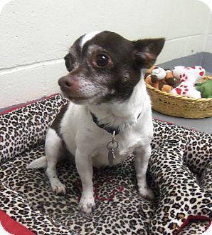 Chihuahua Dog for adoption in Slidell, Louisiana - Princess