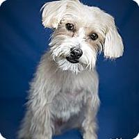 Adopt A Pet :: Romeo - Rancho Mirage, CA