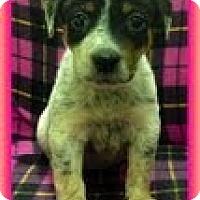 Adopt A Pet :: Misty - Staunton, VA