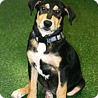Adopt A Pet :: Evan - Franklin, TN