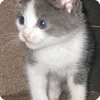 Adopt A Pet :: Dusty - Dallas, TX