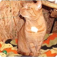 Adopt A Pet :: Sylvester - Morris, PA