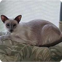 Adopt A Pet :: Maggie - Naples, FL