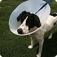 Adopt A Pet :: Plum - Southampton, PA